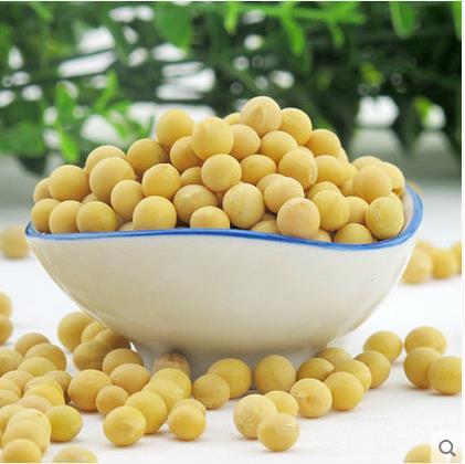 非转基因农家黄豆