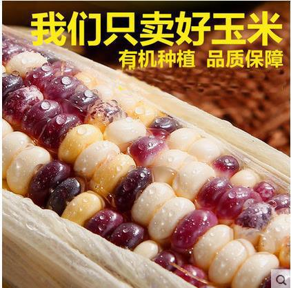 玉米糯玉米棒粘玉米    黏穗非转基因新鲜玉米