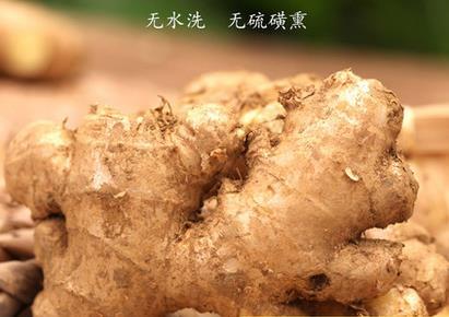 精选农家无硫磺生姜    新鲜蔬菜 500克