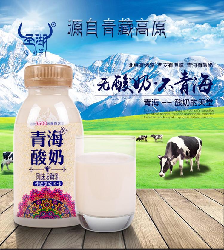 [顺丰包邮]青海老酸奶8 瓶装低温酸奶圣湖酸奶保温箱加冰航空包邮
