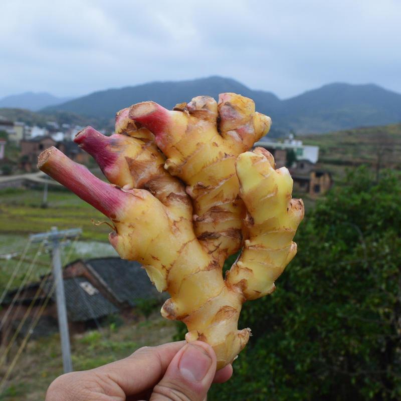 农家自种小黄姜 有机生姜 月子姜 祁东新鲜生姜 老姜 三斤包邮