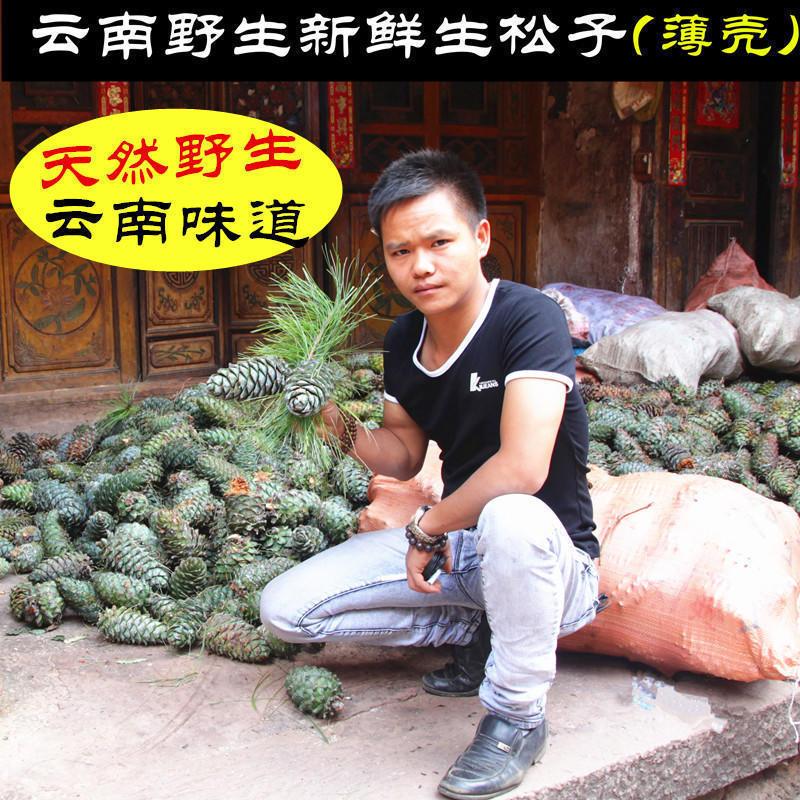 云南特产野生新鲜生松子1斤 落水湿松子坚果不开口未加工