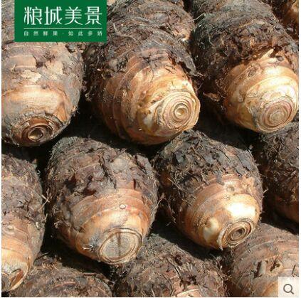 广西特产荔浦大芋头5斤 槟榔香芋艿新鲜大芋头鲜芋仙蔬菜 包邮
