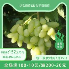 【预售】蒸湘区乡村振兴主打产品-华农葡萄&金手指葡萄 5/10斤 10斤