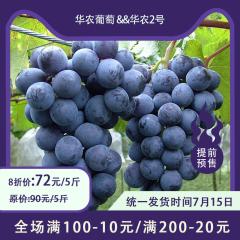 【预售】蒸湘区乡村振兴主打产品-华农葡萄&华农2号 5/10斤 5斤