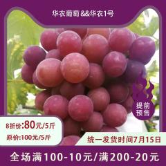 【预售】蒸湘区乡村振兴主打产品-华农葡萄&华农1号 5/10斤 10斤