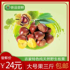 丹东大板栗个大味甜尝鲜价21.8元3斤 香甜软糯包邮