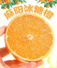 助农扶贫:冰糖橙中果
