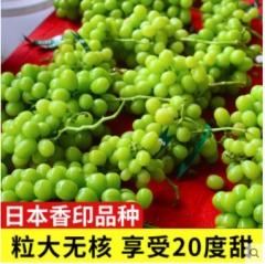 阳光玫瑰青提5斤装香印无籽葡萄新鲜青幻日本晴王一级果 孕妇水果