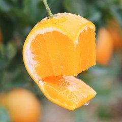 爱心助农: 冰糖橙净含量9斤大果
