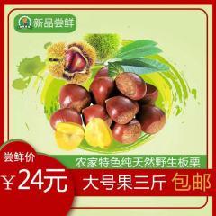 劲爆尝鲜价24元3斤丹东大板栗个大味甜 香甜软糯包邮