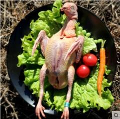 乳鸽新鲜农家散养鸽子现杀非老鸽子3只装生鲜煲汤滋补