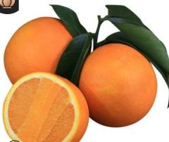秭归伦晚脐橙春橙10斤新鲜橙子橙手剥橙当季水果整箱非赣南冰糖橙