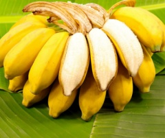 广西小米蕉皇帝蕉当季新鲜水果芭蕉香蕉全年供应3-9斤 9斤