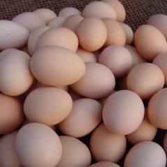 正宗农家散养土鸡蛋新鲜农村家养鸡蛋放养土柴笨草受精蛋30枚