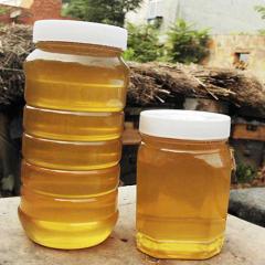 湖南特产野生蜂蜜 纯正天然农家自产深山成熟蜂蜜500g